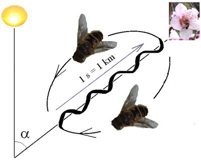 Cool thing: Bee dance